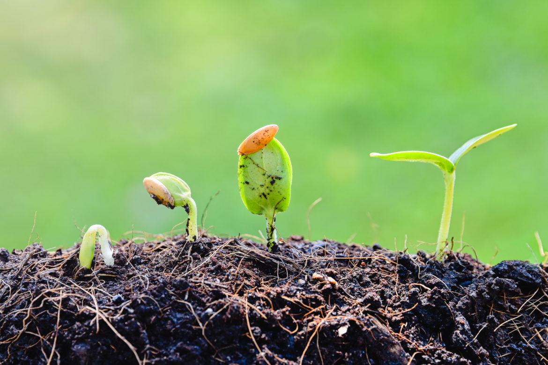Ajutor european pentru agricultură ecologică